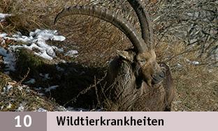 10_Wildtierkrankheiten