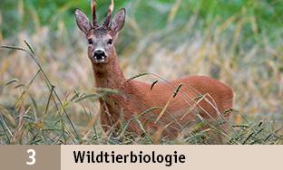 3_Wildtierbio