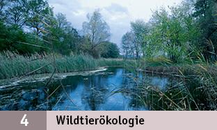 4_Wildtieroeko