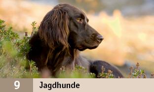 9_Jagdhunde